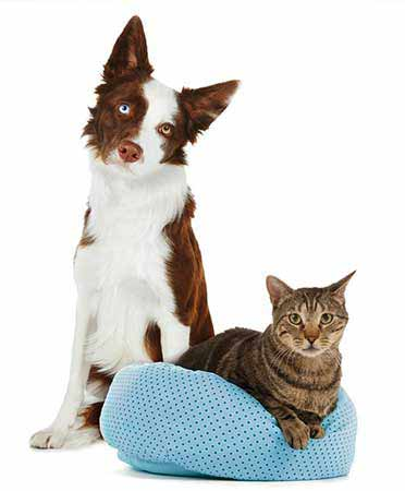 petfood dog and cat